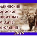 Гороскоп на 2019 год по славянскому календарю по годам рождения