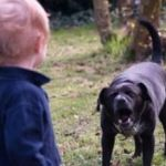 Заговорить укус собаки