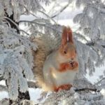 Стихи о зиме