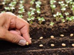 Молитвы и заговоры на урожай при севе и посадке